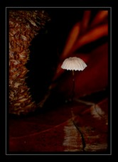 Mushroom Art for Sale by Artist C Ribet 03