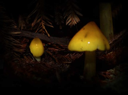ribet mycology photos mushroom art for sale by artist c ribet